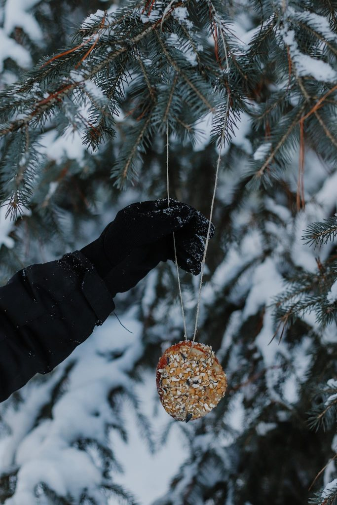 winter feast tree DIY bird feeder