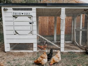 DIy chicken coop sign